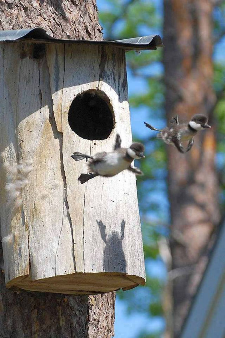 20 Beautiful Images Showing an Animal's Unconditional Love - Baby birds learning to fly.