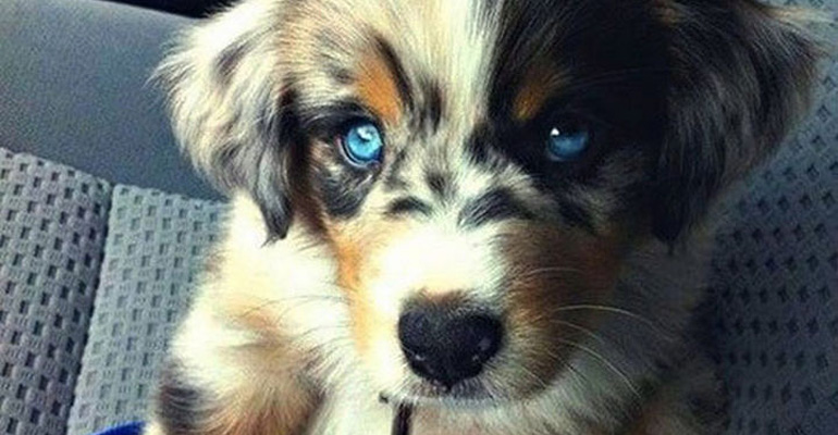 21 Mixed Breed Dogs That Are so Cute You'll Fall in Love with Every One of Them