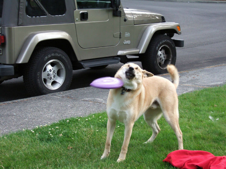 25 Photos Before Disaster Strikes - Dogs are great at catching a Frisbee but obviously not every time.