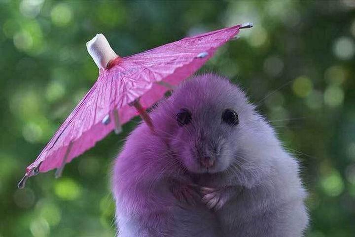 29 Tiny Baby Animals - Tiny mouse holding her umbrella.