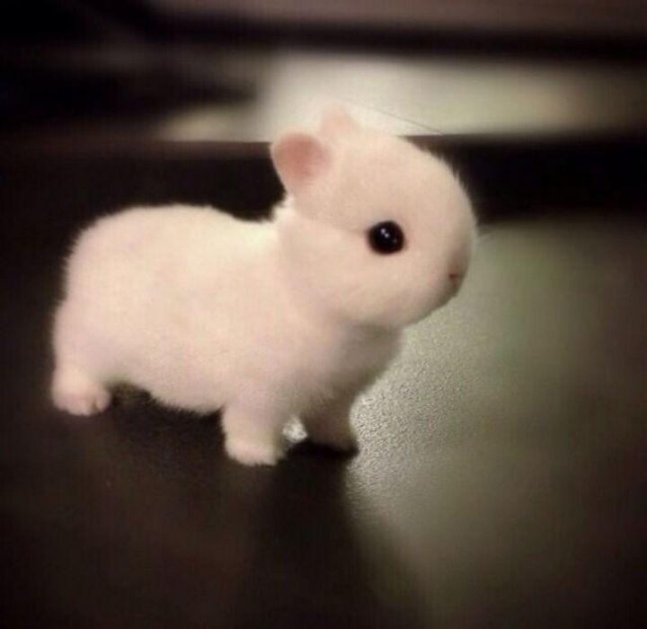 29 Tiny Baby Animals - Fluffy baby bunny.