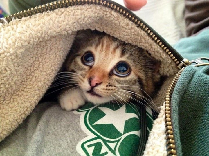 29 Tiny Baby Animals - Shy kitten hiding under a hoodie.