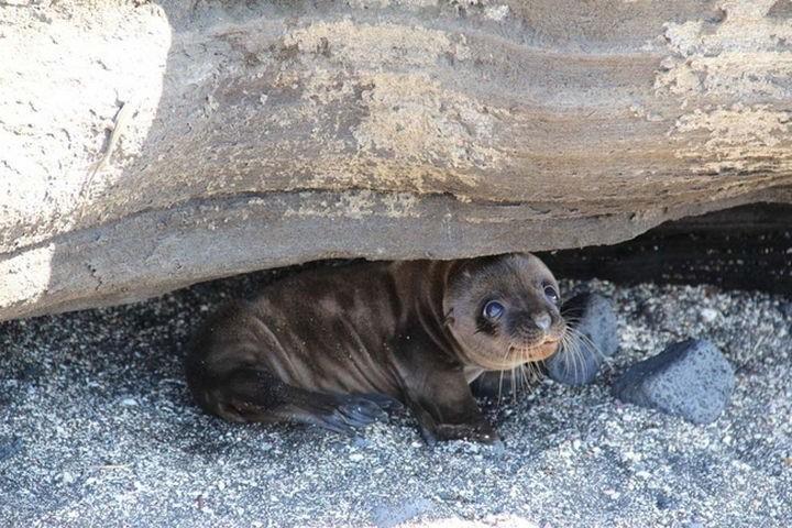 29 Tiny Baby Animals - Happy little baby seal.