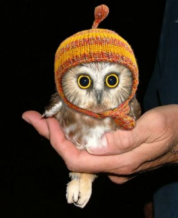 29 Tiny Baby Animals - Cute baby owl wearing a beanie hat.