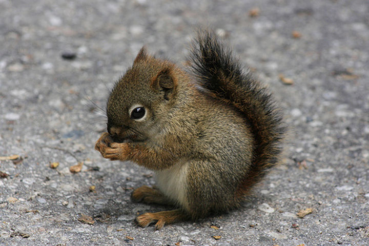 29 Tiny Baby Animals - Cute baby squirrel having a snack.