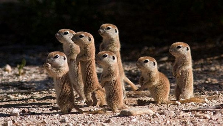 29 Tiny Baby Animals - Cute baby prairie dogs.