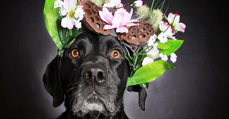 Colorful Photos Have Helped These Black Dogs Get Adopted and Find Loving Homes