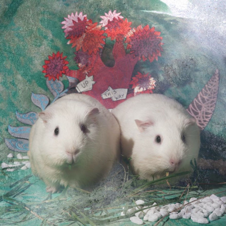 Meet Tweedledee and Tweedledum.