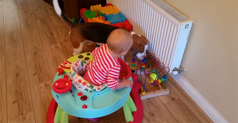This Adorable Beagle Teaches Us Why Dogs Belong with Kids.