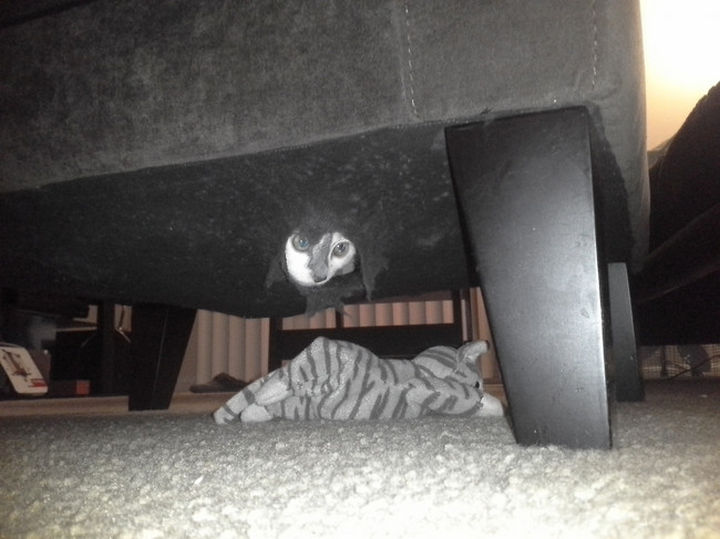 27 Stealthy Ninja Cats - Sofas make for good hiding places...