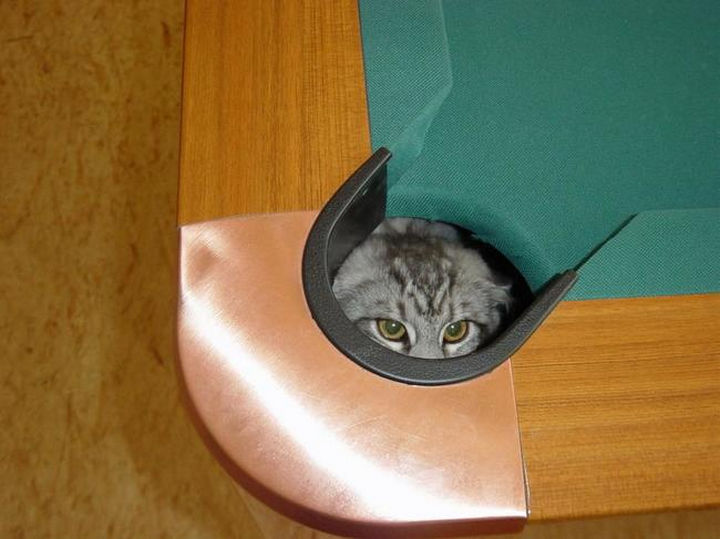 27 Stealthy Ninja Cats - Pool tables make good hiding places.
