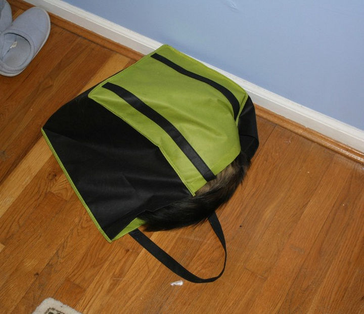 27 Stealthy Ninja Cats - Basically any bag that is lying around makes a good hiding place.