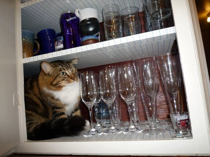 27 Stealthy Ninja Cats - Cats and expensive wine glasses don't mix.