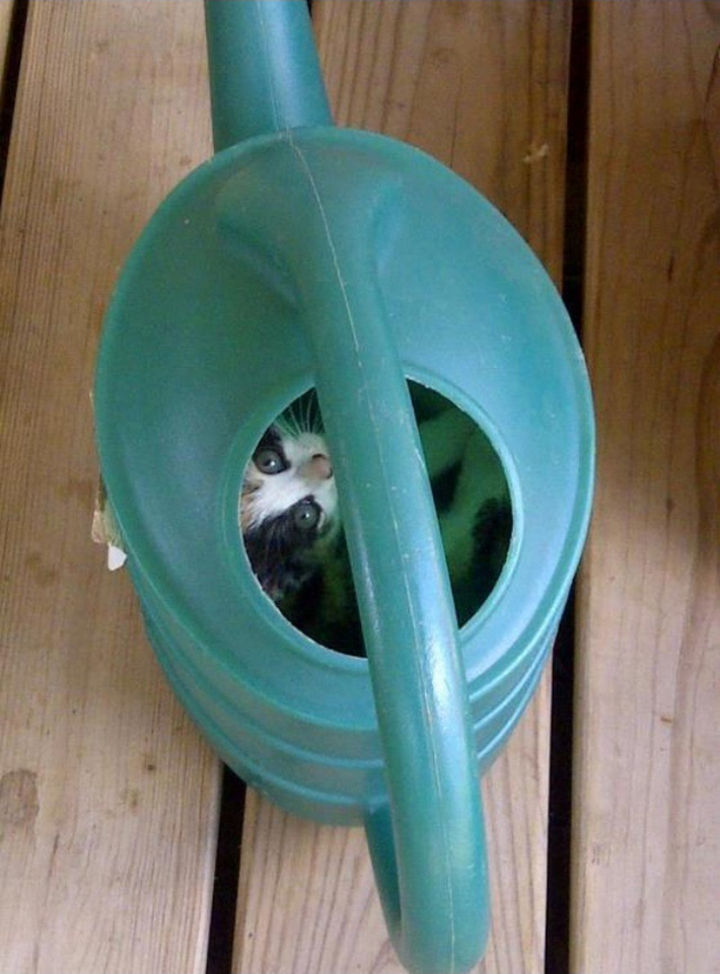 27 Stealthy Ninja Cats - The watering can is the last place they'll look.