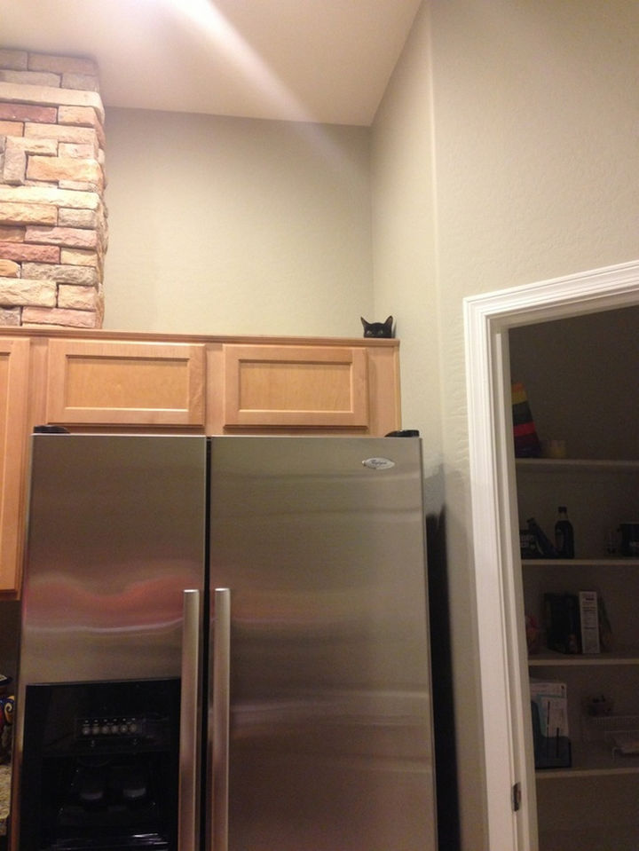 27 Stealthy Ninja Cats - The can scale any wall.