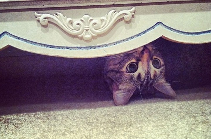 27 Stealthy Ninja Cats - Hanging out under the dresser.
