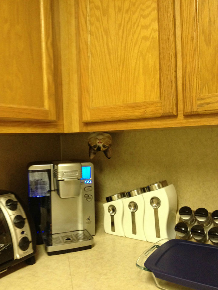 "27 Stealthy Ninja Cats - ""Did I hear someone say coffee?"""