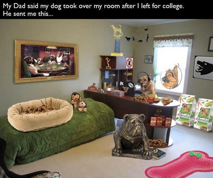 33 Trolling Parents - My dad said my dog took over my room after I left for college. He sent me this...
