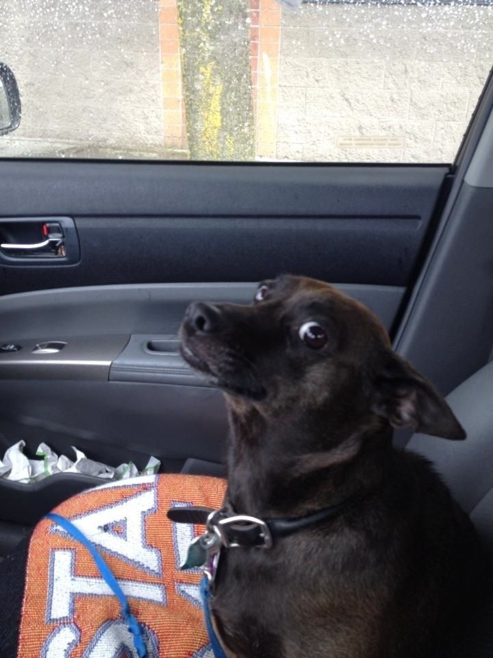 """""""How come we're using a different route to go to the pet store?"""""""