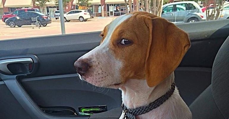 35 Dogs and Cats That Were Tricked into Going to the Vet.