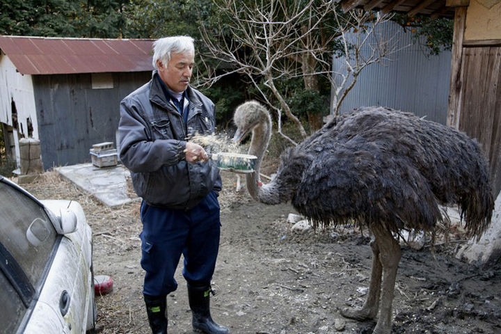 People who know his story call him the 'Guardian of Fukushima's Animals'.