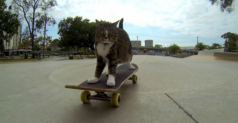 Skateboarding Cat Takes the Daily Grind to a Whole New Level.