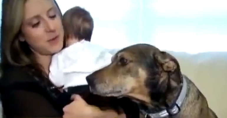 Duke the Dog Rescues His Owner's Baby With His Quick Action.