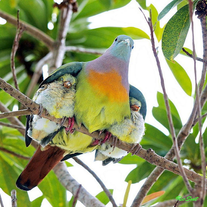 21 Animals and Their Young - A father bird protecting his young.