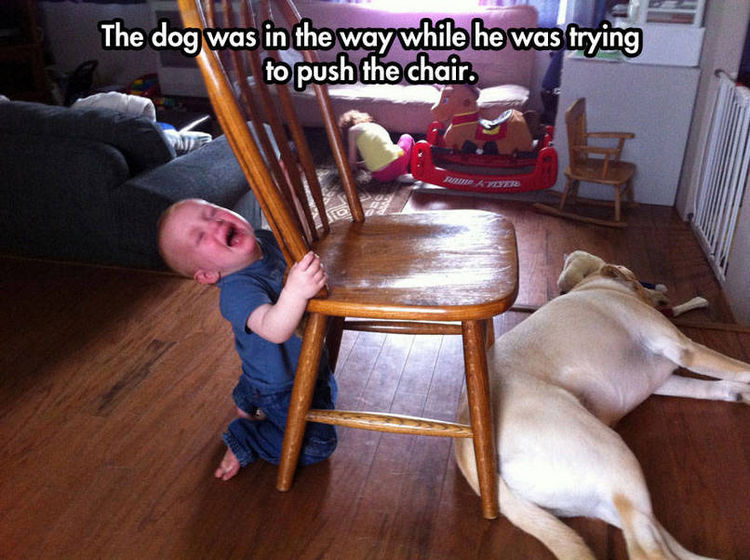 37 Photos of Kids Losing It - The dog was in the way while he was trying to push the chair.