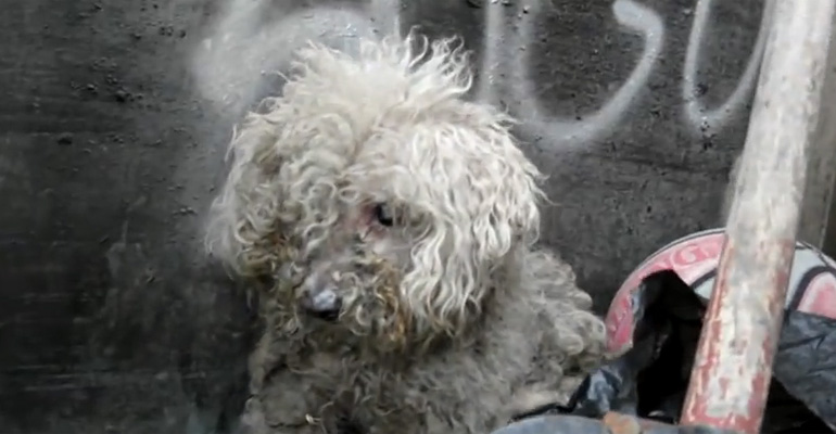 Blind Dog Got Rescued but What Happened After Is a Miracle.
