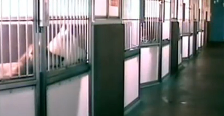 Red the Intelligent Dog Lets Other Animals Out of Their Kennels and It's Hilarious.