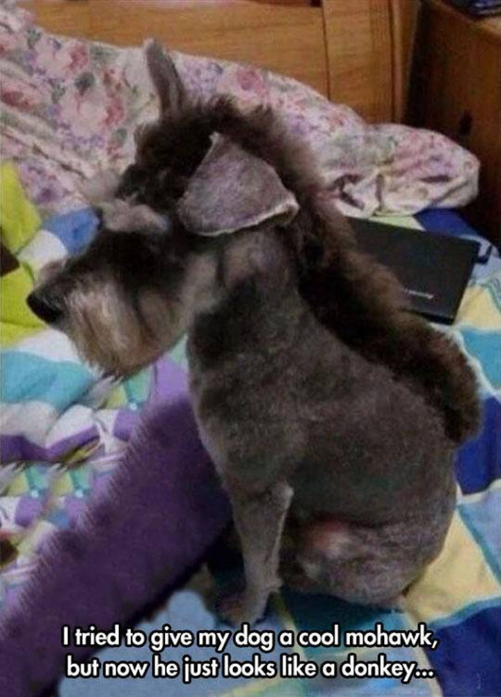 23 Funny Dog Haircuts - Just don't mention the word 'Donkey' around him.