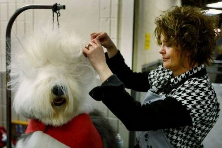 23 Funny Dog Haircuts - This dog likes it retro with huge 80's hair.