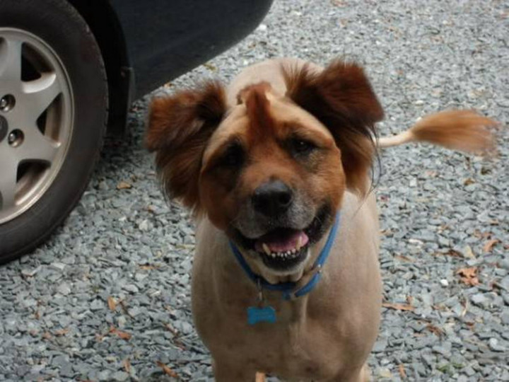 23 Funny Dog Haircuts - Boost his confidence and tell him he looks great.