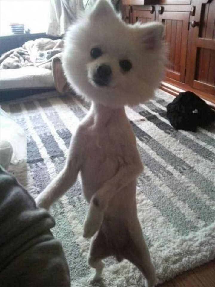 23 Funny Dog Haircuts That Will Make You Laugh Or Cringe