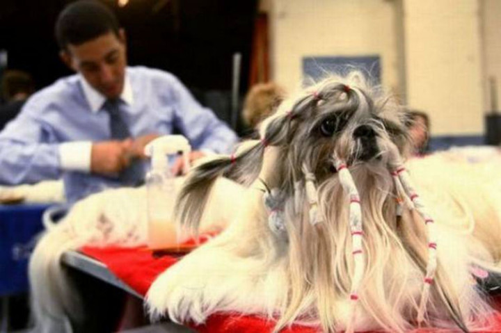 23 Funny Dog Haircuts - Going after the dreadlocks.