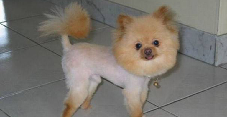 23 Weird Dog Hairdos That Will Either Make You Laugh or Cringe