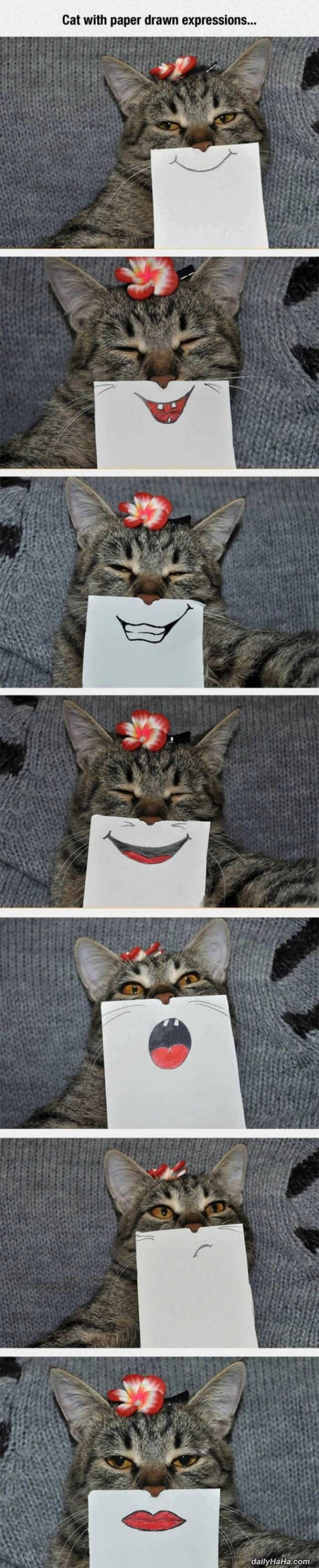75 Incredibly Funny Pictures That Will Make You Smile - Cats are so funny with drawn expressions.