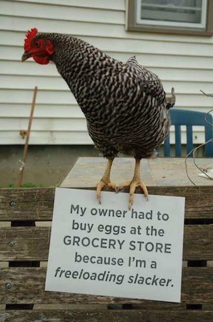 75 Incredibly Funny Pictures That Will Make You Smile - Time to get a job.