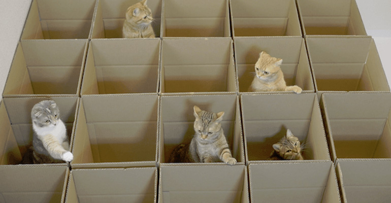 9 Cats Discovered a Cardboard Box Maze and Play All Day.
