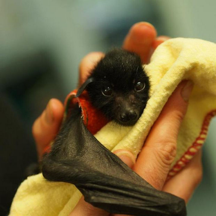 Their cute little faces will make you change your mind if you think bats are creepy looking.