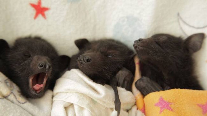 These little guys are even cute when they are tired and I'm so happy they are getting the care they need.
