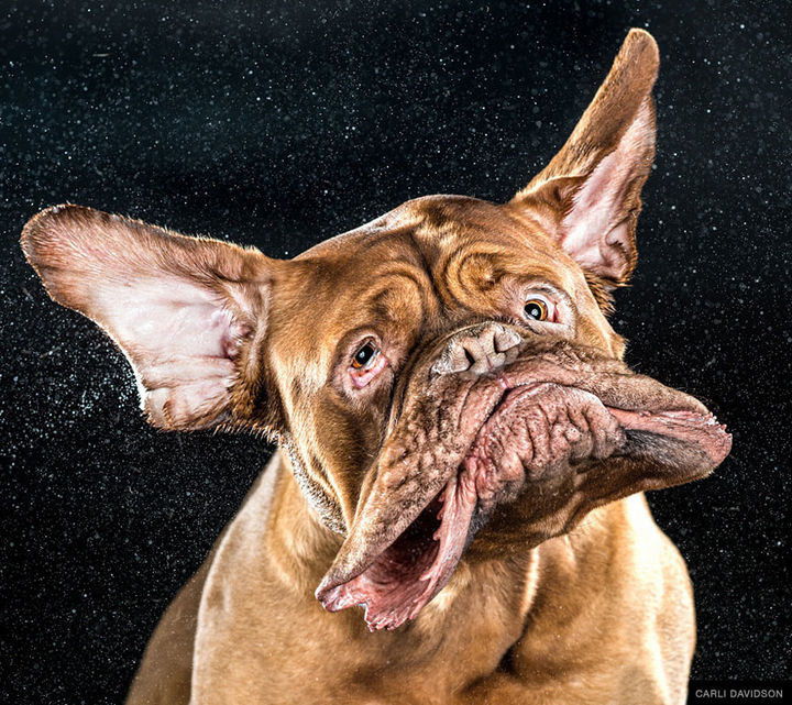 Carli Davidson, an award-winning photographer perfectly captured hilarious facial expressions that many of us with dogs only see for fractions of a second.