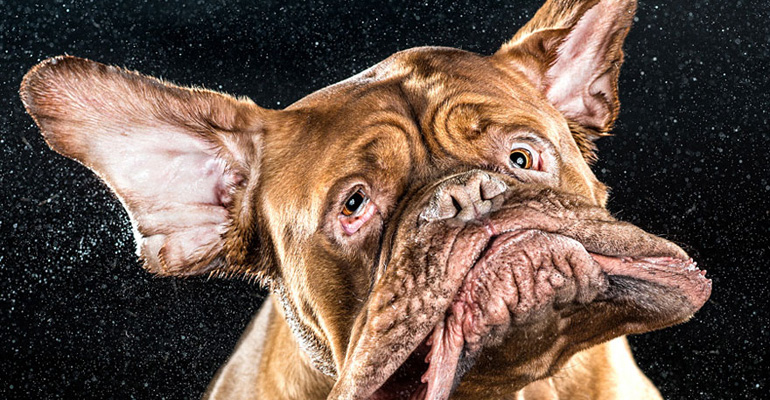 Photographer Captures Dogs Shaking Their Heads in All Their Drooling Glory