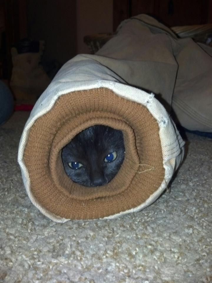 """15 Hilariously Curious Cats - """"I'm nice and toasty in this jacket sleeve but how to get out?"""""""