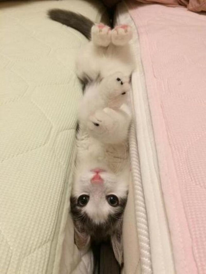 """15 Hilariously Curious Cats - """"Well, now I've done it."""""""