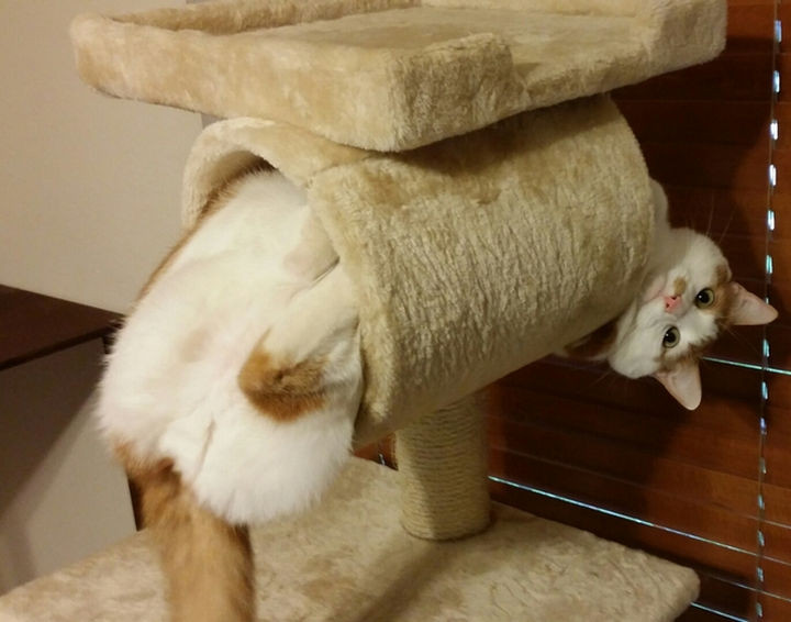 """15 Hilariously Curious Cats - """"Yes, mistakes were made. I accept that. Now help me out."""""""