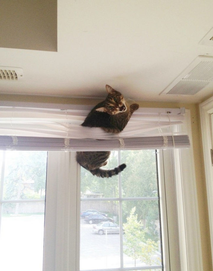 "15 Hilariously Curious Cats - ""Can't you tell I really want to go outside!!"""