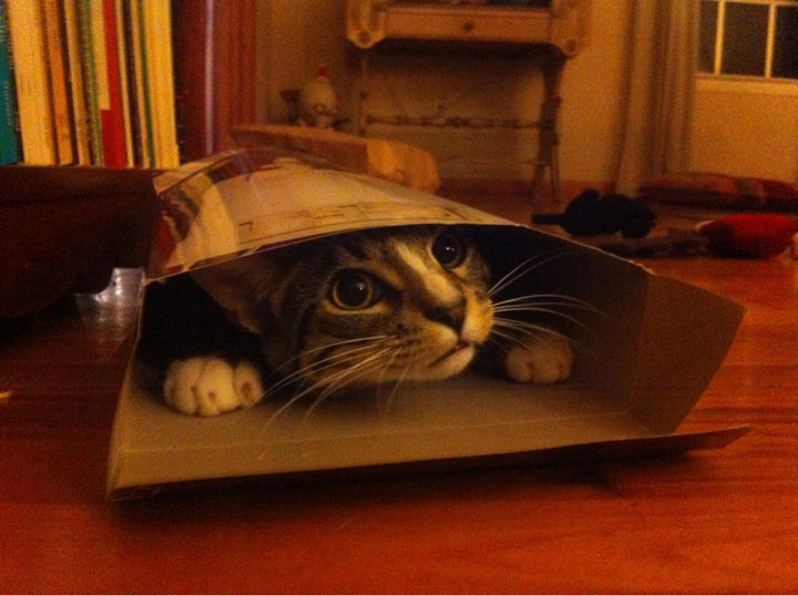 "15 Hilariously Curious Cats - ""I'm the prize in your cereal box. You're welcome."""