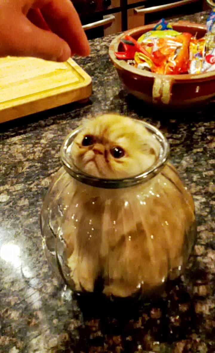 """15 Hilariously Curious Cats - """"You can't tell me what to do, silly human."""""""